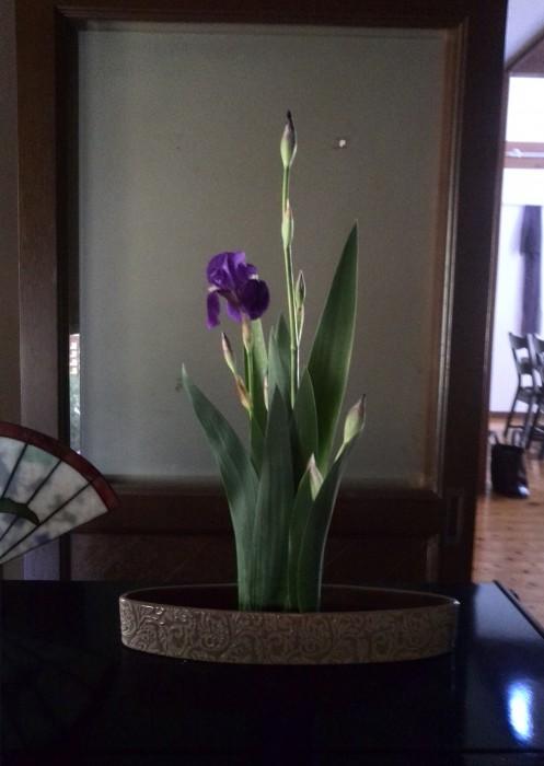 凛としたいちはつのお生花です。これから菖蒲の仲間たちが次々咲きます。